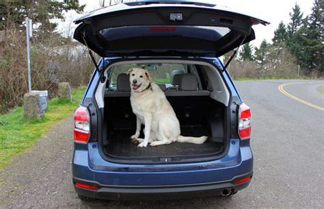 subaru forester   cars  dog lovers complex