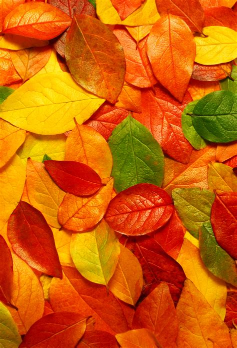 Autumn Leaves Wallpaper For Iphone X, 8, 7, 6 Free