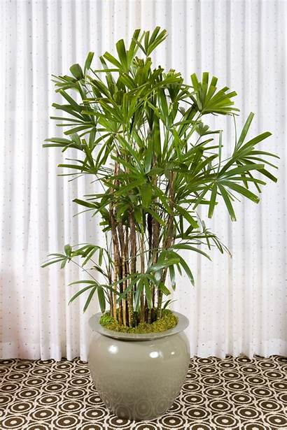 Indoor Plants Tall Plant Easy Maintain Gardening