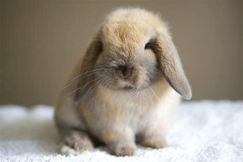 rabbits  sale