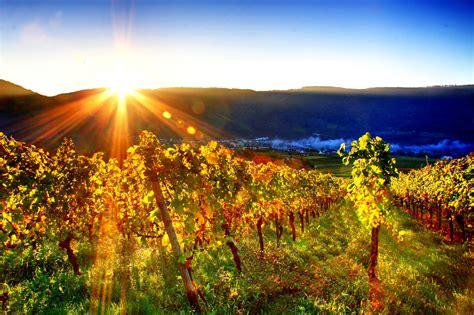 Free Image Hd by 27 Wonderful Hd Vineyard Wallpapers