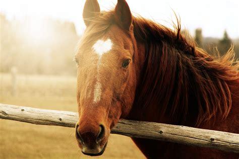 Animals Horse Horse Face Brown Sun Background Wallpaper