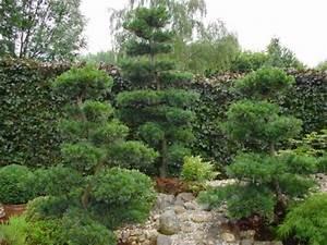 Bäume Für Den Garten : japanischer garten b ume ~ Lizthompson.info Haus und Dekorationen