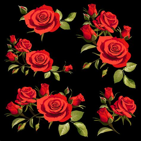red rose  black background vectors vector background