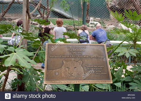siegfried and roy secret garden memorial to sitarra white tiger siegfried roy s secret