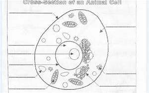 November 9  2016  U2013 Mrs  Derochers U0026 39  Super Science Site