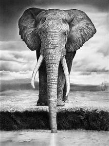 10+ Excellent Elephant Drawings for Inspiration - Hative