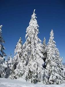 Geschmückter Weihnachtsbaum Fotos : vom frost geschm ckter weihnachtsbaum fotos ~ Articles-book.com Haus und Dekorationen