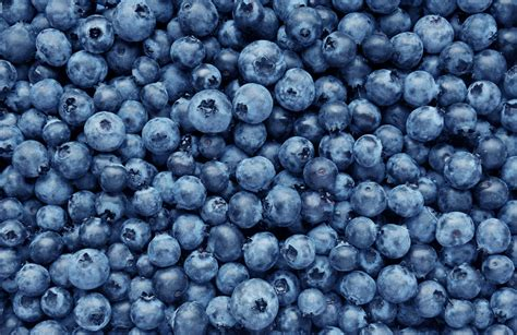 what can you make with blueberries hungry gardeners guide for spring harvest