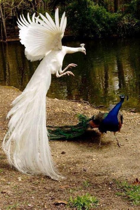rare birds images  pinterest exotic birds