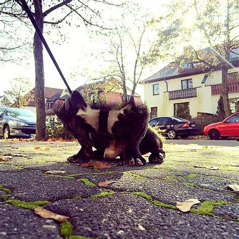 panoramic     wrong life  dogs
