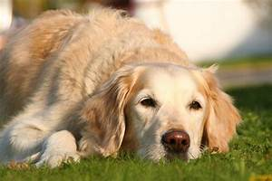 canine prostate cancer