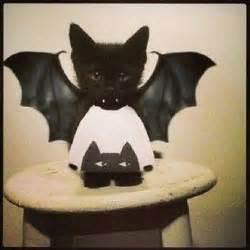 bat cat a bat cat wearing our cat sweater oeufnyc lol
