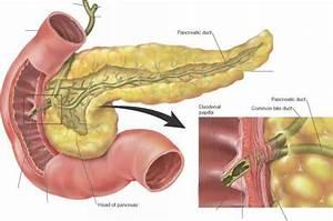 Pancreatic Juice Blood Vessels