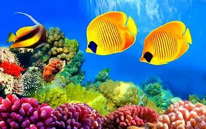 Fish Underwater Ocean Sea Sealife Fishes Nature