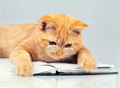 katzenfutter test  die besten sorten im vergleich