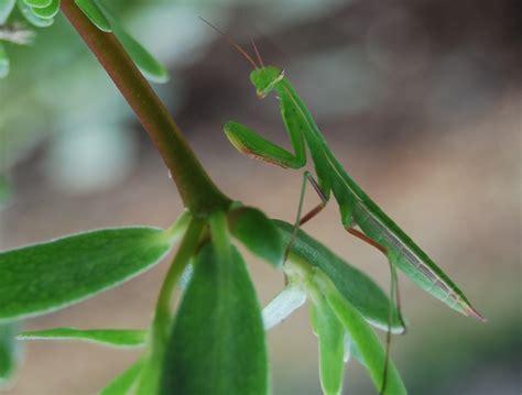 sights   falls park nashua  hampshire page