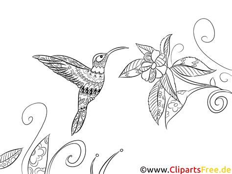 ausmalbild fuer erwachsene vogel fauna