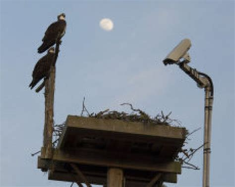 people love watching nature on nest cams until it gets