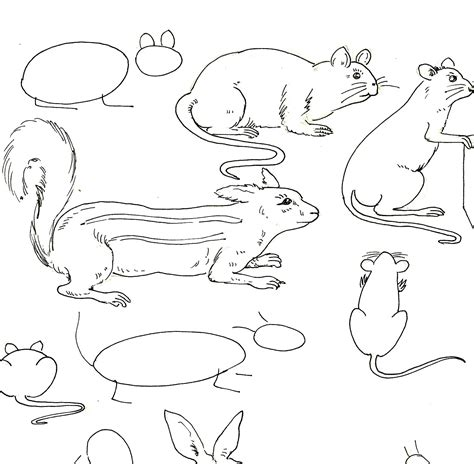 studentsdrawing animaloutline drawing