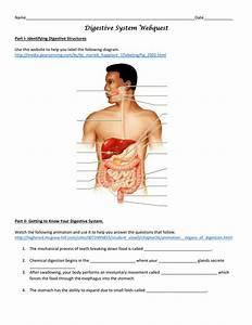 Digestive System Webquest