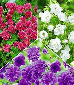 Winterharte Blumen Für Den Garten : kollektion winterharte geranien 1a pflanzen baldur garten ~ Whattoseeinmadrid.com Haus und Dekorationen