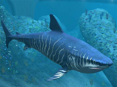 Megalodon Images Megalodon Shark Megalodon Shark Fish Facts Hd Photos