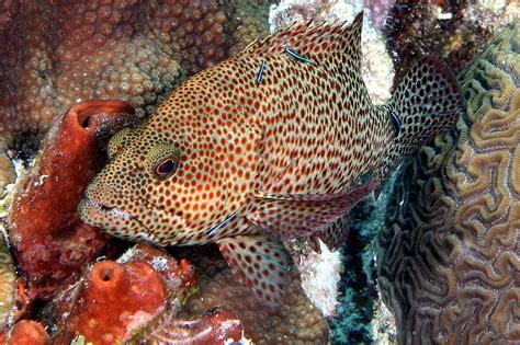 grouper rock teeth eye glass
