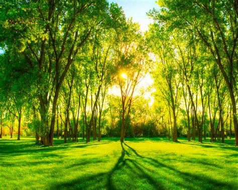 beibehang personnalise photo papier peint  vert foret