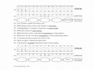 Protein Synthesis Translation Worksheet Answer Key