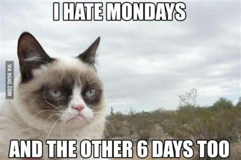 I Hate Mondays Meme - grumpy cat meme grumpycat grumpy cat pinterest