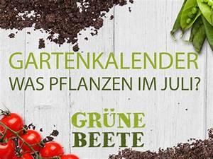 Pflanzen Im Juli : welches gem se im juli pflanzen eat smarter ~ Orissabook.com Haus und Dekorationen