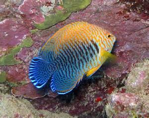 Rare Beautiful Fish