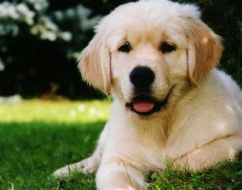 dog canis lupus familiaris animals   animals