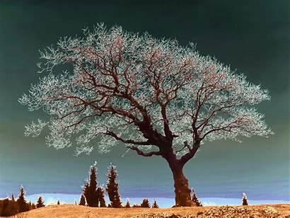Religious Spiritual Tree Naturalism Religion Nature Trees