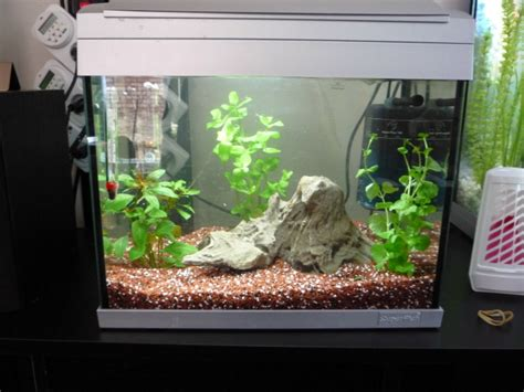 mes aquariums pr 233 sentation des bacs forum