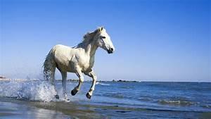 White Horse Running on the Beach ~ Mystery Wallpaper