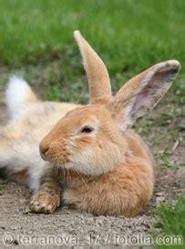 kaninchen impfen tierarzt auf raedern