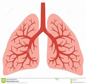 Cartoon Human Lungs