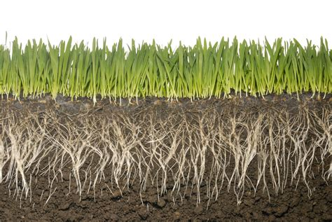 Roots Need Rest To Reach Resources