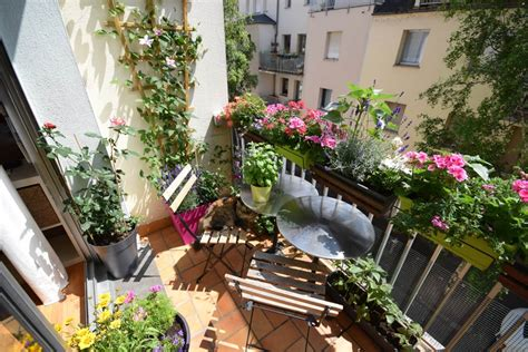 piante ricanti per terrazzo fiori per terrazzi piante da terrazzo