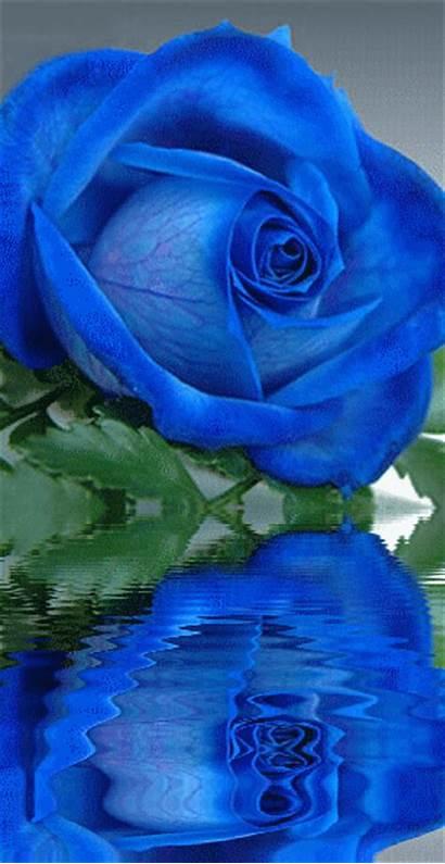 Rose Roses Flowers Flower Rosa Dreamies Graphics
