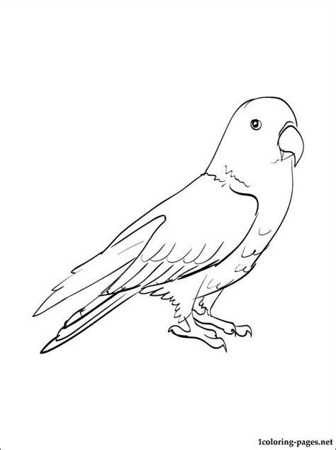 eclectus  drawing coloring pages