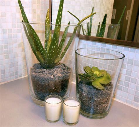 jenis tanaman pas menghias kamar mandi rumah
