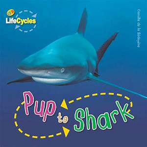 Lifecycles  Pup To Shark