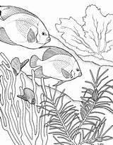 Reef Coral Drawing Galleryhip Credit Larger Coloring sketch template