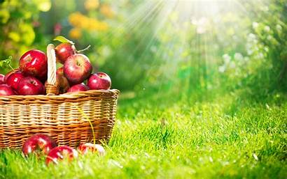 Fruit Wallpapers Downloaded Computer Apple Most