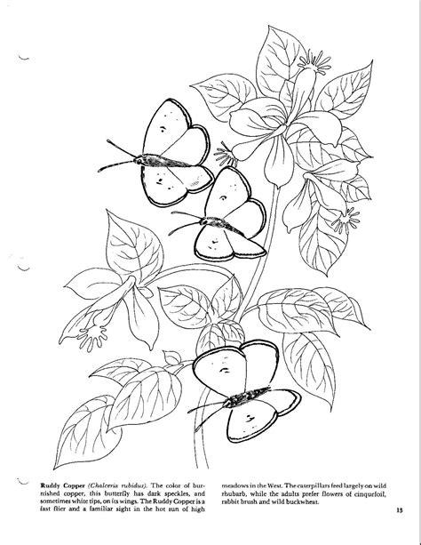 Coloring Oleo by Butterflies Coloring Book Tutoriales Dibujos Para