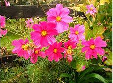 Image Gallery las flores