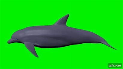 Dolphin 3d Screen Swimming Gifs Cycle Copy